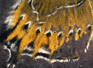 Signe Klejs: Blown Away – A Butterfly Necropolis